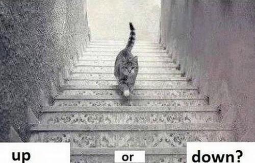 Gato-Escada-Enigme (1)