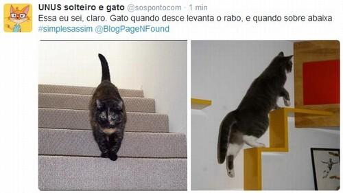 Gato-Escada-Enigme (2)