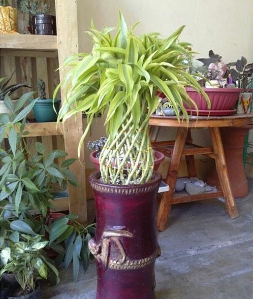 plantas para jardins umidos ? Doitri.com