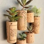 rolhas plantas