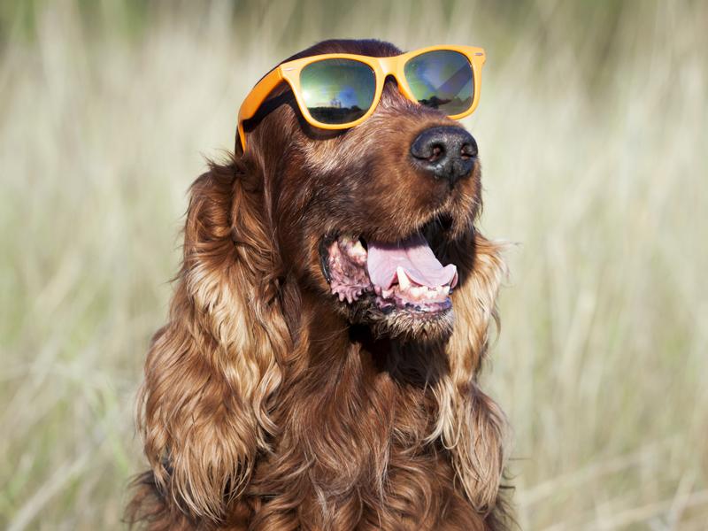 a5e4d6aee87 É possível economizar mais de R  200 na compra de um par de óculos